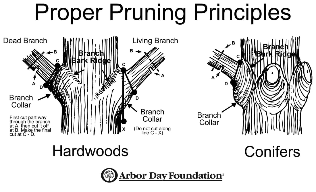 Tree Pruning Principles