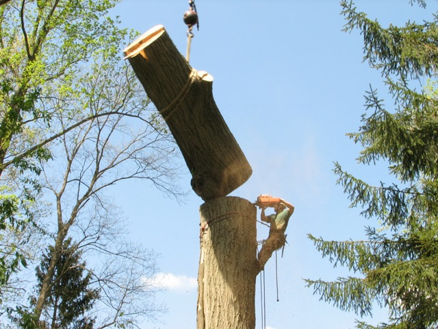 Tree Removal Appleton WI